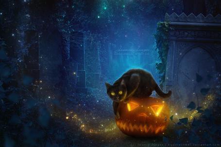 Фото Черная кошка сидит на тыкве на старом кладбище, by kuschelirmel