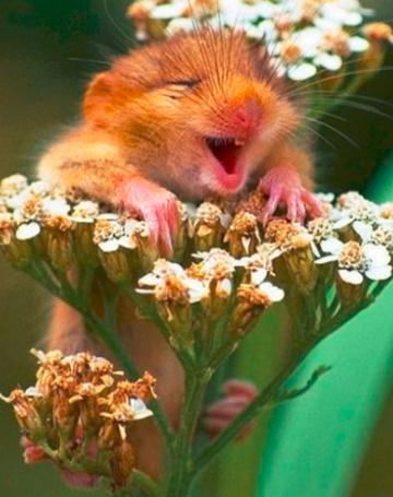 Фото зверей в цветах