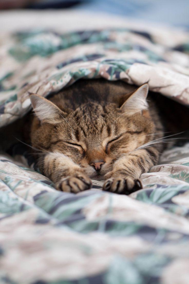 Картинки спать кошки