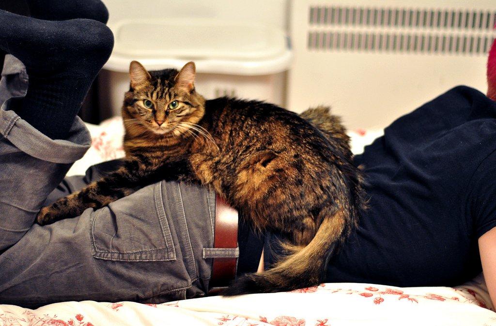 кошка с хозяином картинки том, как оформить