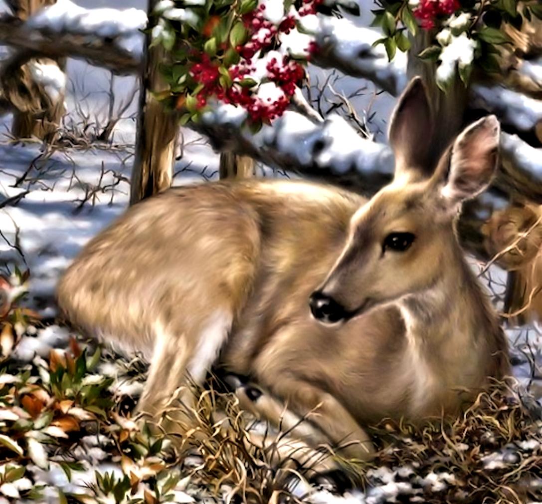 Для, открытки оленята