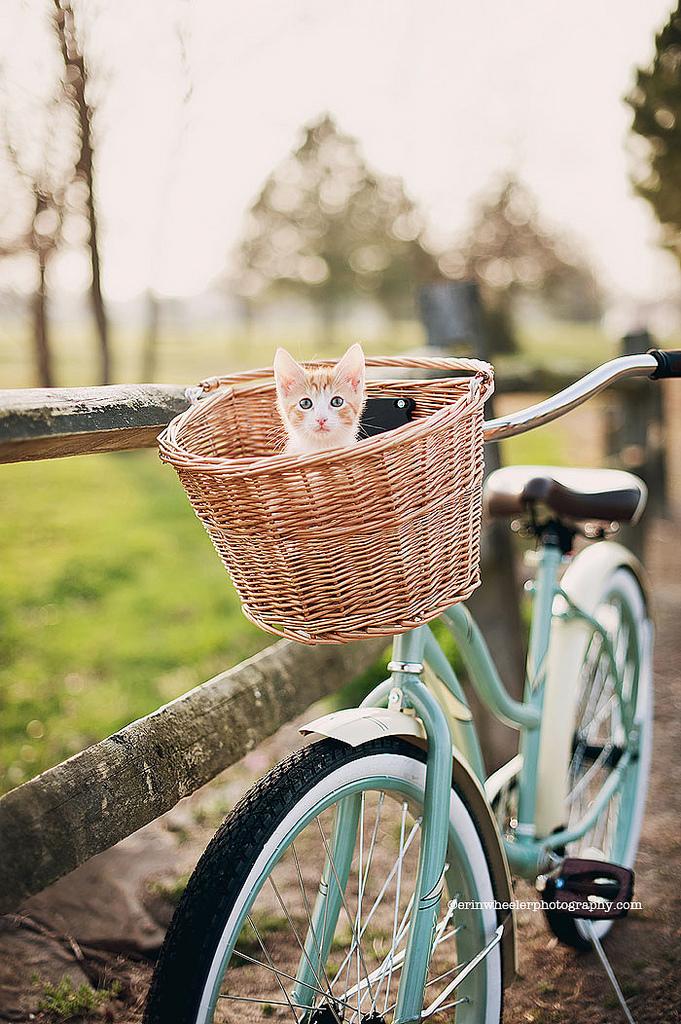 более картинки котенок на велосипеде может праву считаться