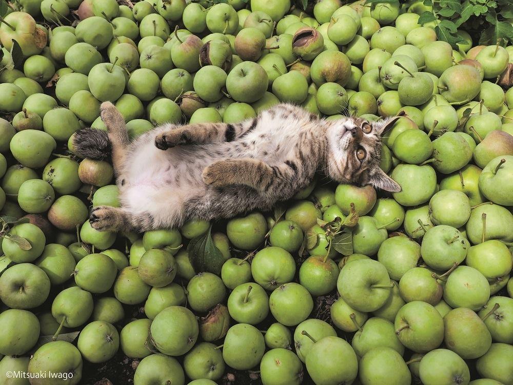 Надписью, картинки с яблоками приколы