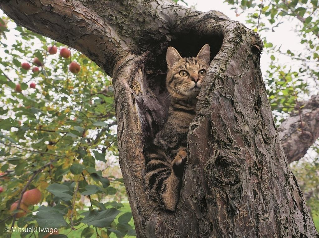 Картинка кот лезет на дерево