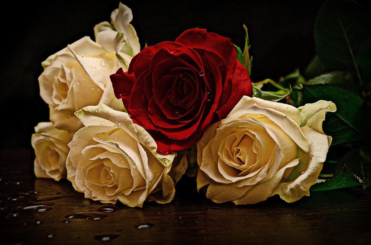 Открытки роза белая роза алая