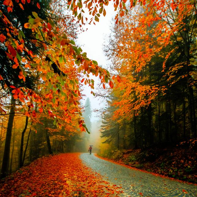 Фото Человек под зонтиком идет по дороге в осеннем лесу