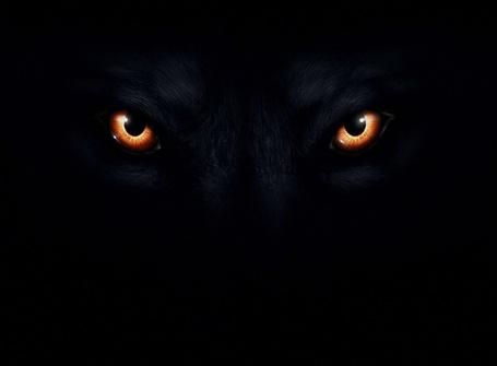 Фото Глаза черного волка