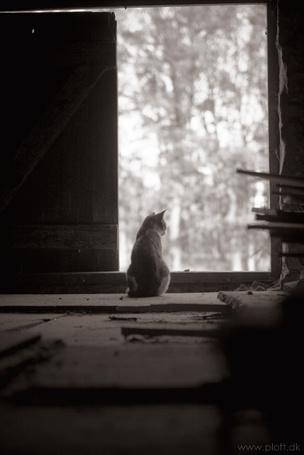 Фото Кошка сидит у открытой двери, by ploftdk