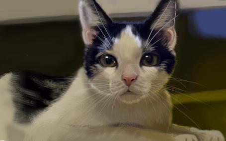 Фото Рисунок кота, by nena211