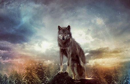 Фото Волк на вершине скалы, by Aeternum-Art