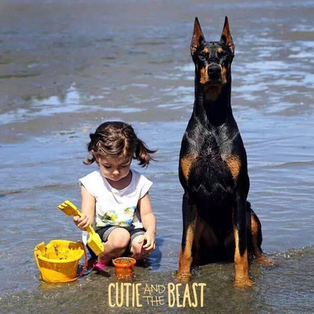 Фото Девочка с доберманом сидят в воде, девочка играет с игрушками, ву Siena Prucha