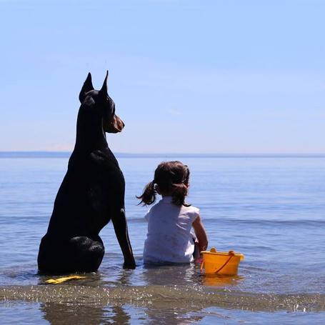 Фото Девочка с доберманом сидят в воде и смотрят вдаль, ву Siena Prucha