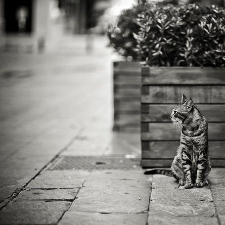 Фото Кот сидит на тротуаре возле деревянного ящика с цветами, by Alexander Kan