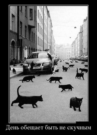 Фото Много черных котов на улицах города (День обещает быть нескучным)