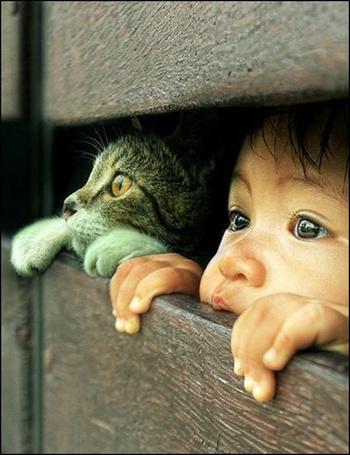 Фото Два любопытных друга