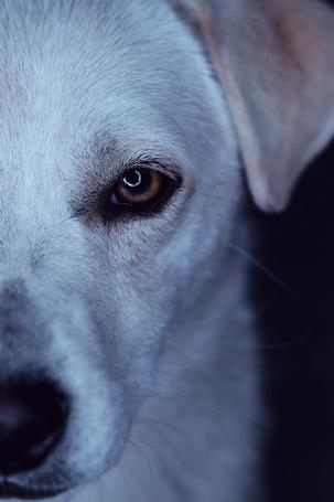 Фото Необычный взгляд собаки, by Alex