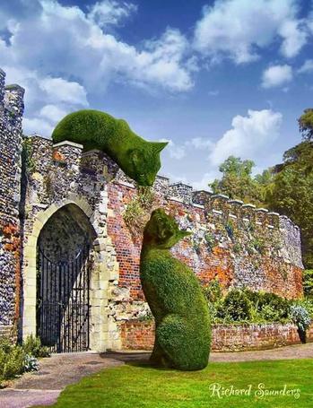 Фото Около стены замка кусты, подстриженные в форме кошек, Richard Saunder