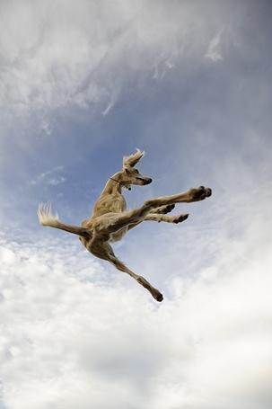 Фото Собака учится летать, фото Alyat