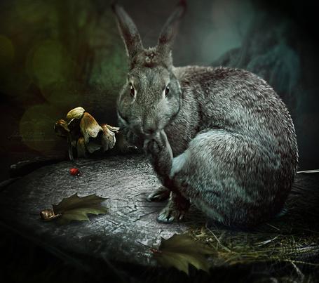 Фото Кролик сидит на пне, by Alena-48