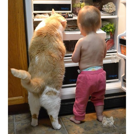Фото Малыш и кот вышли на охоту и открыв холодильник, обозревают его содержимое, деля свою добычу