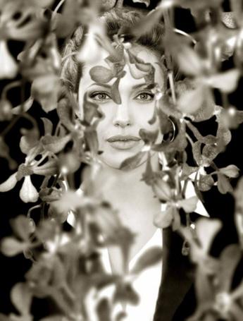Фото Актриса Анджелина Джоли стоит позади ветвей с лепестками цветов