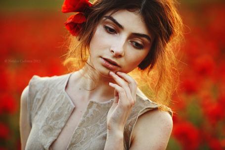 Фото Девушка шатенка с маками в волосах на фоне макового поля, by Natalia Ciobanu