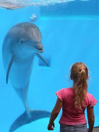 Фото Дельфин приветствует девочку за стеклом в океанариуме