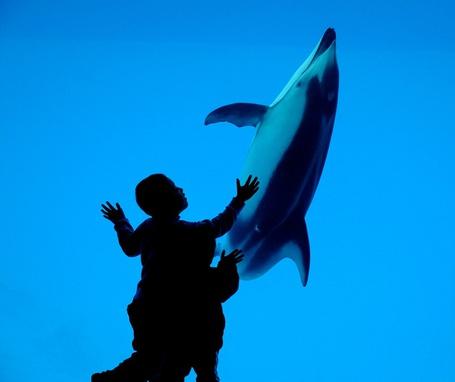 Фото Дети восторгаются дельфином в океанариуме