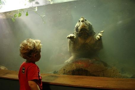 Фото Мальчик наблюдает за огромной черепахой за стеклом в океанариуме