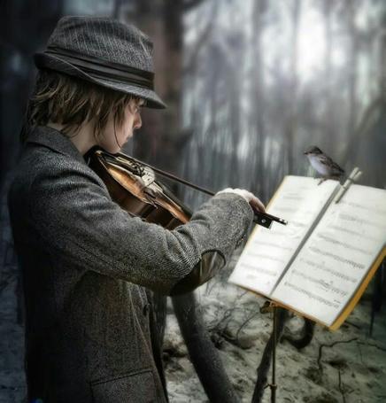 Фото Парень смотрит в ноты, стоящие на пюпитре, где сидит воробей, и играет на скрипке