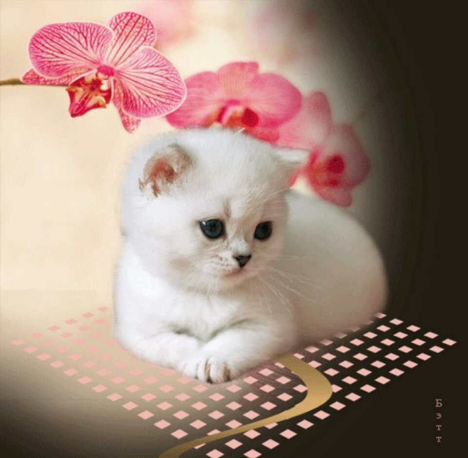 Фетра, картинки анимации котенок