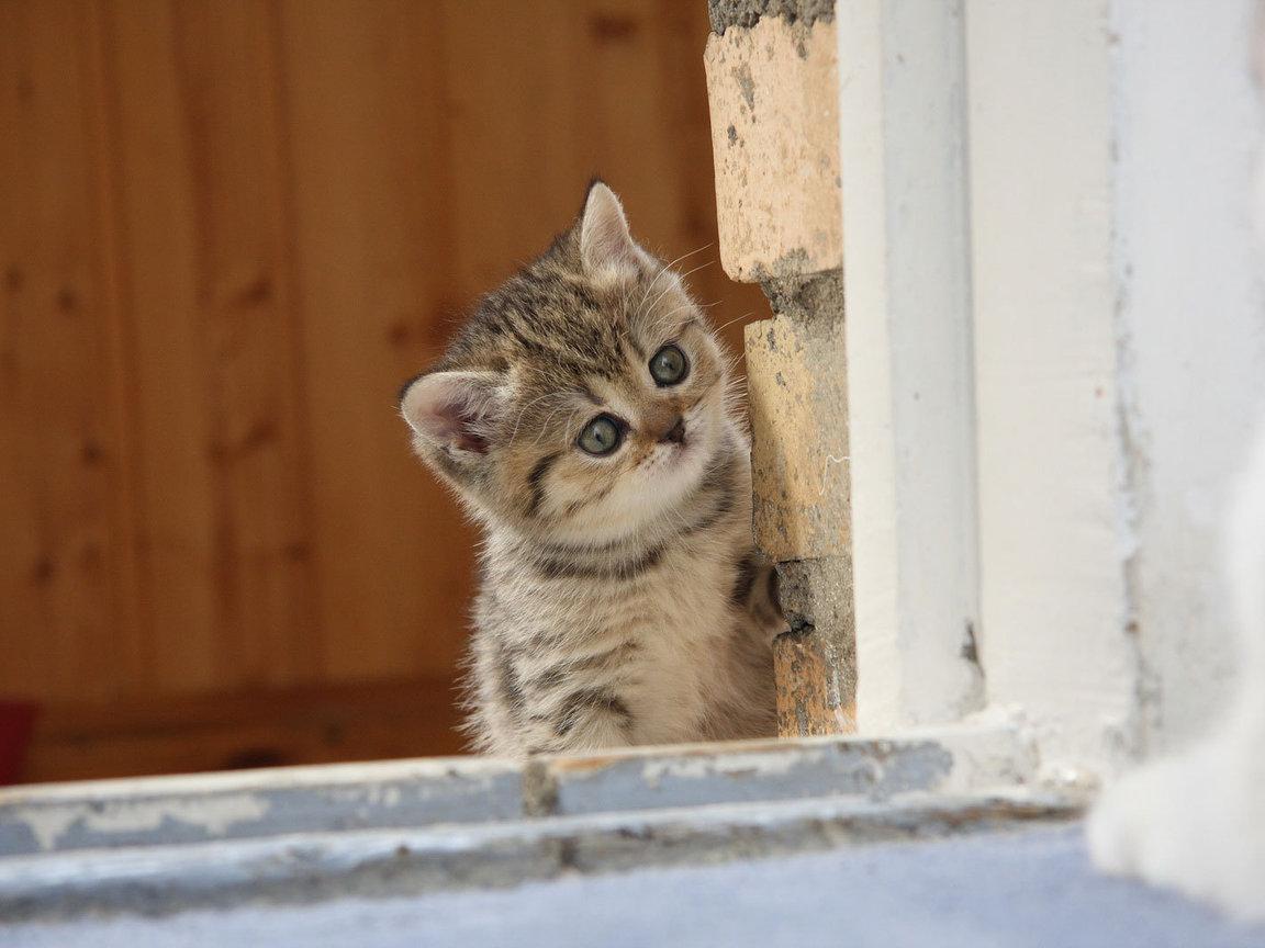 Картинки с котятами прикольные фото, телефон картинки днем