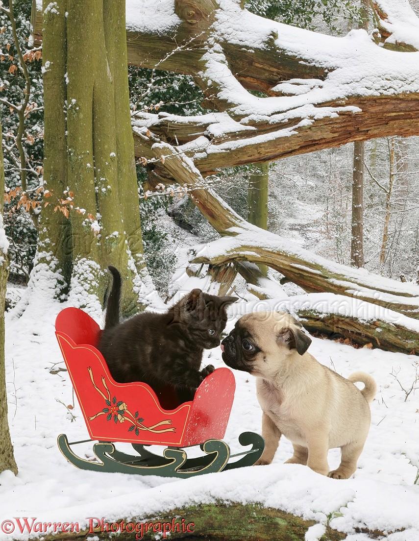 картинки щенки и котята зимой вертикальные