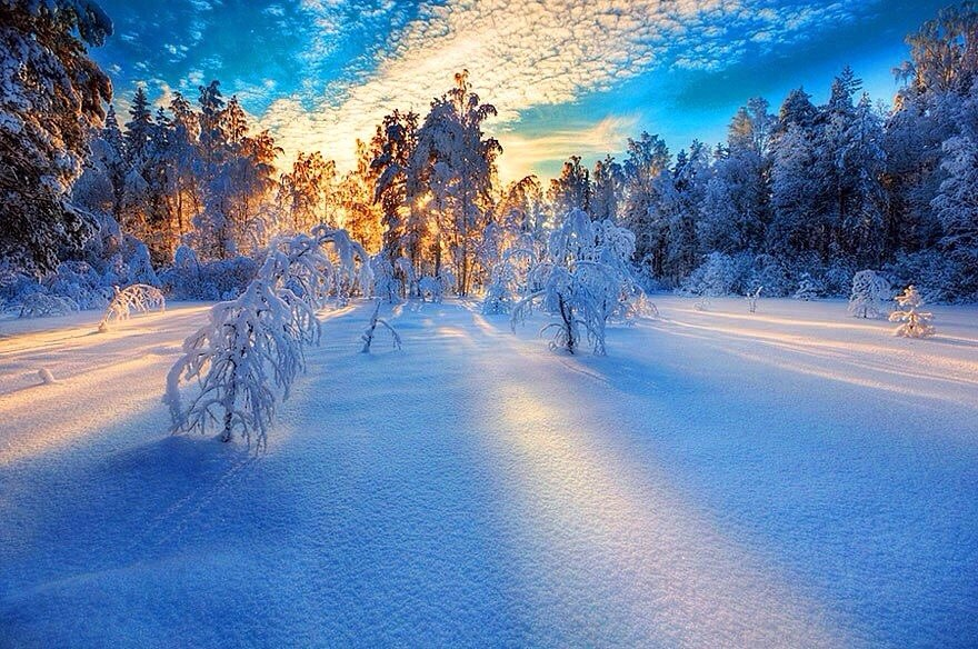 Вид на зимний лес