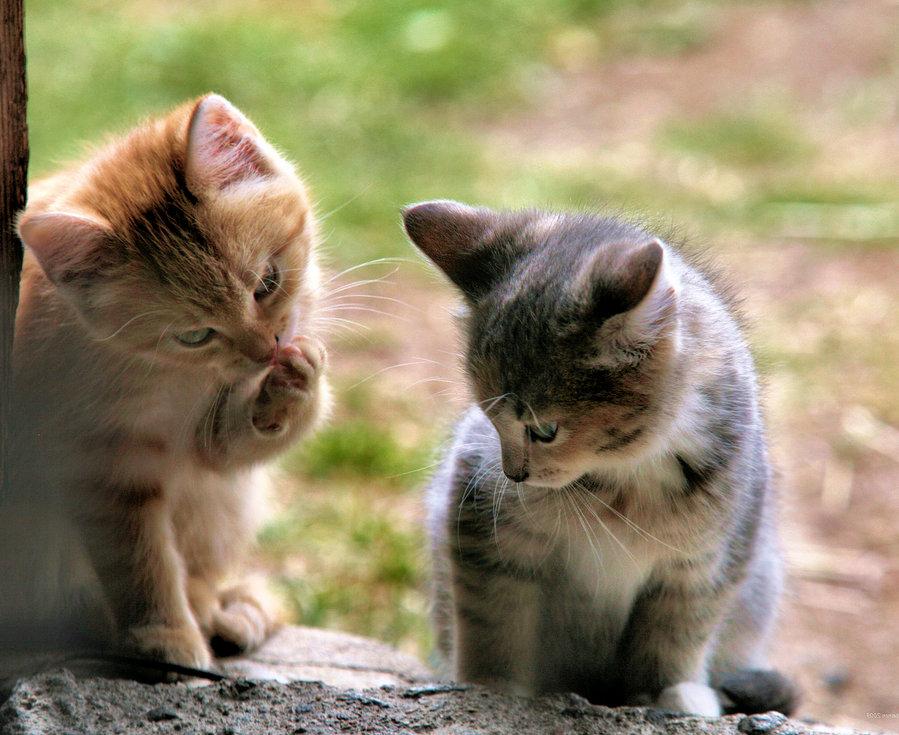 подарочной картинки где котики дружат листья это отличная