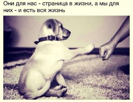 Фото Собака подает лапу (Они для нас - страница в жизни, а мы для них - и есть вся жизнь)