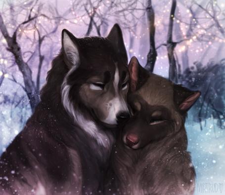 Фото Волки прижавшись друг к другу сидят на снегу, by MIRTRUD