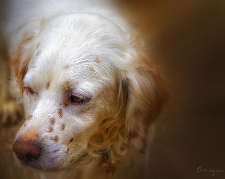 Фото Грустный пес, ву Salih Seviner