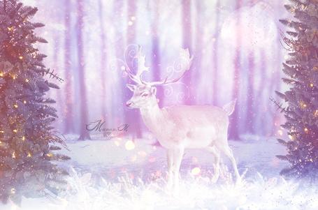 Фото Новогодний олень, by Manon-M