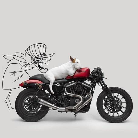 Фото Бультерьер лежит на мотоцикле, рядом нарисованная пожилая женщина, by rafael. mantesso