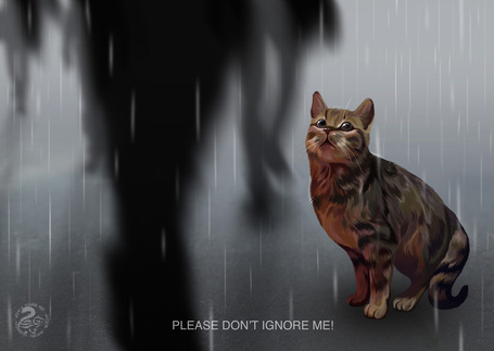 Фото Please Dont Ignore Me / пожалуйста, не игнорируйте меня, котенок сидит под дожем, а мимо проходят люди, by Nojjesz