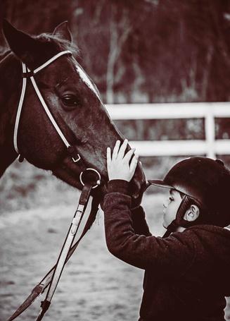 Фото Мальчик положил руку на мордочку лошади, by Jelena Simic-Petrovic