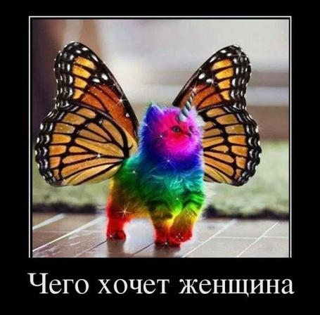 Фото Симбиоз няшной кошки и красивой бабочка (Чего хочет женщина)