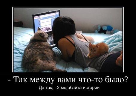 Фото Девушка с котами лежит рядом с ноутбуком (Так между вами что - то было? Да так, 2 мегабайта истории)