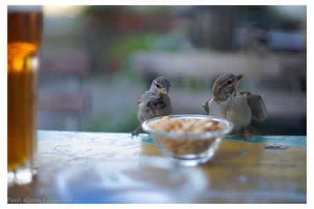 Фото Воробьи у тарелки с орешками, by LeadyGonzales