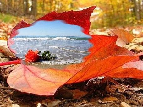 Фото Желто-красный лист дерева лежит на земле в осеннем лесу, на нем видны набегающая морская волна и красная роза, лежащая на морском берегу
