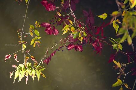 Фото Листья осень скоро зима