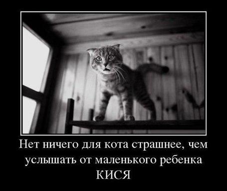 Фото Испуганный серый котенок (Нет ничего для кота страшнее, чем услышать от маленького ребенка КИСЯ)