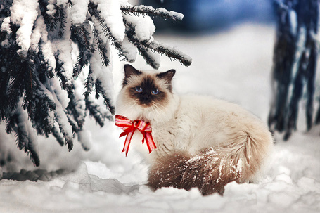 Фото Кошка с бантиком сидит на снегу, by Thunderi