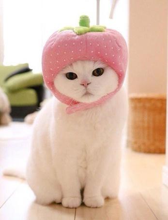 Фото Кошка сидит на полу, на голове у нее надета шапочка в виде ягодки с хвостиком